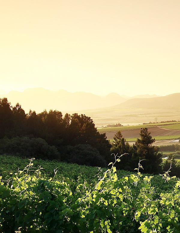 Våra producenter, Båstad Wine & Champagne AB